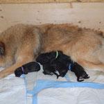 Kurz nach der Geburt... Alle sind erschöpft