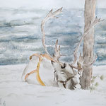 Reindeer sleeping 16,5 in. x 22 in. 42 x 56 cm - 240,00 Euro