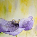 Anemone II -  11,8 in. x 15,7 in. - 30 cm x 40 cm - 380, 00 Euro - sold