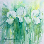 White Irises 15 in. x 15 in. - 38 x 38 cm - 380,00 Euro