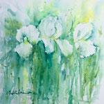 White Irises 15 in. x 15 in. - 38 x 38 cm - 580,00 Euro