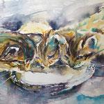 Drinking Kitten r  11 in. x 15 in. - 28 x 38 cm - 380,00 Euro