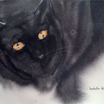The Cats of Girona - 3 -  15 in. x 22 in. - 38 x 28 cm - 320,00 Euro
