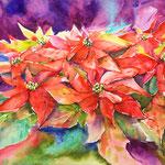 Flores de Pascua 46 cm x 30,5 cm - 18 in. X 12 in. - 280,00
