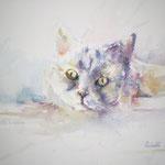 Pet Me! 18,9 x 14,2 in.  48 x 36 cm - 240,00 Euro