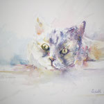 Pet Me! 18,9 x 14,2 in.  48 x 36 cm - 340,00 Euro