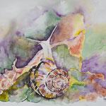 Autumn Snail 22 x 16,5 in. - 56 x 42 cm - 220,00 Euro