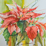 Christmas Poinsettia  14,2 in. x 18.9 in. - 36 cm x 48 cm - 420,00 Euro
