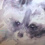 Little Raccoon 8,6 in. x 10,6 in. 22 x 27 cm - 140,00 Euro