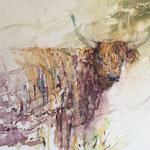 The soft soul - A Highland Cattle -  11 x 15 inch. - 28 x 38 cm 280,00 Euro