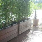 Pflanztröge aus Garappaholz (tropisch bepflanzt mit Bambuss)