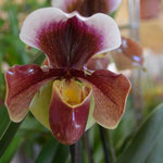Exposition d'orchidées à Fontfroide