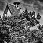 Evangelische Kirche mit Storchennester