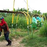 Zehn Bananenstrünke werden mit Muskelkraft über mindestens 1km gezogen