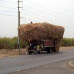 Ob dieser Lastwagen wegen der grossen Ladung Zuckerrohr stehen blieb?