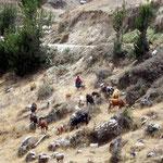Eine peruanische Kuh- Pferde- Schafe- und Schweinehirtin
