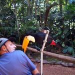 Peter schaut etwas kritisch zum Tucan, im Vogelpark