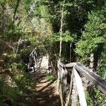 Wanderweg im Naturpark von Coyhaique in Chile