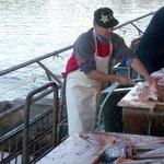 Täglicher Fischmarkt im chilenischen Valdivia, im Hintergrund ein Seelöwe