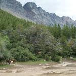 Aussichtspunkt auf 1200 Meter über El Bolson, wirklich Alp mit Kühen