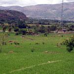 In Peru wird Reis in grossem Stil angebaut