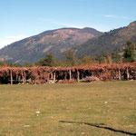 Versammlungsplatz der Mapuche, den Ureinwohnern Chiles und Argentiniens, die von den Kolonialmächten nicht ganz ausgerottet wurden. Das schattenspendende Laubwerk wird jedes Jahr erneuert