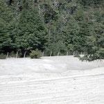 Das Weisse sind Asche und Lavasteinchen vom chilenischen Vulkan Cordón Caulle der Vulkangruppe Puyehue, nach Argentinien geblasen, mit verheerenden Folgen für die betreffenden Region um San Martin de los Andes