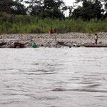 Ohne Maschinen schafft man ein Gramm Gold pro Tag aus dem Rio Napo