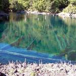 National Park Conguillio. Den See gab es schon, als noch die Dinosaurier hier lebten