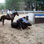 Den Stier zu bändigen ist für den Reiter keine leichte Aufgabe
