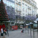 In Buenos Aires gibt es am 22.11.2011 schon Adventsdekoration . Im Hintergrund blühende Bäume.