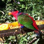 Viele Papagaienarten gibt es im Vogelpark beim Wasserfall Iguazu zu sehen