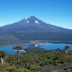 Chilenischer Vulkan Llaima, Laguna Conguillio und Araukarien die zu den Urbäumen zählen