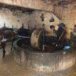 mechanische Olivenölmühle