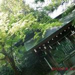 ここは枝垂れ桜のある足羽神社のお清めの湧き水です、冷たくて美味しい