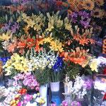ローマの公園のお花屋さん、種類が多い