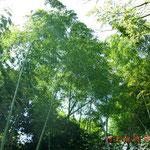 竹林がキレイ