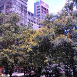 香港の街、大都会ね、エキサイティング☆