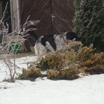 Enero erkundet den Garten