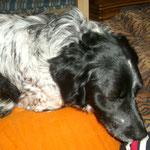 Ausruhen - natürlich auf dem Sofa