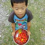 トマトとりました