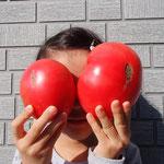 トマト二つ