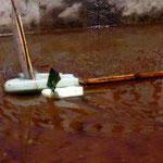 Regatta. Boote aus Bambus & Styropor. Segel aus Plastikabfall bzw. Bananenblatt, Kambodscha