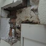 Befall von Wespen in der verputzten Aussenwärmedämmung
