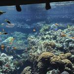 Aquarium Hagenbeck
