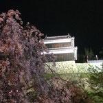 上田城 千本桜 3