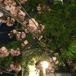 京都 祇園 1