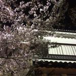 上田城 千本桜 2