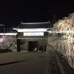 上田城 千本桜 4
