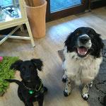 Rocky & Kalle